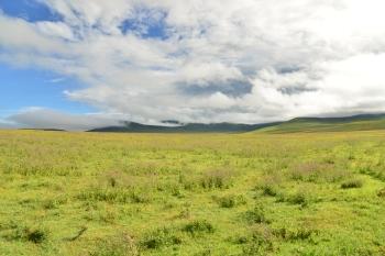 Covering Grounds: Ngorongoro Conservation Area and Serengeti National Park