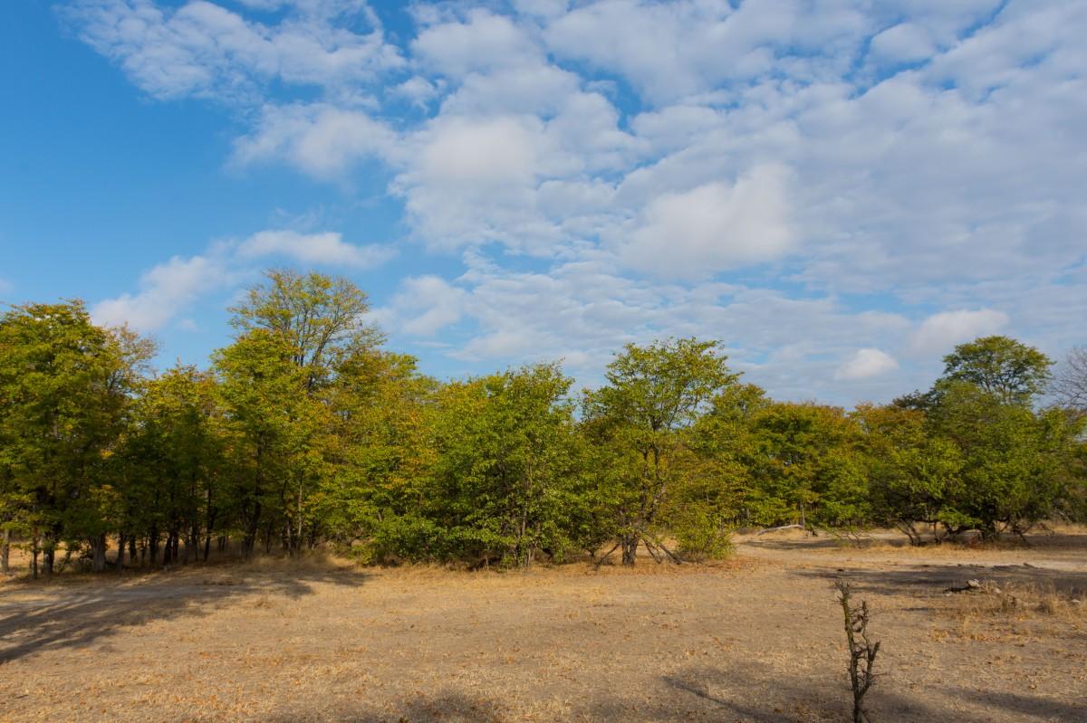 Liwonde Park