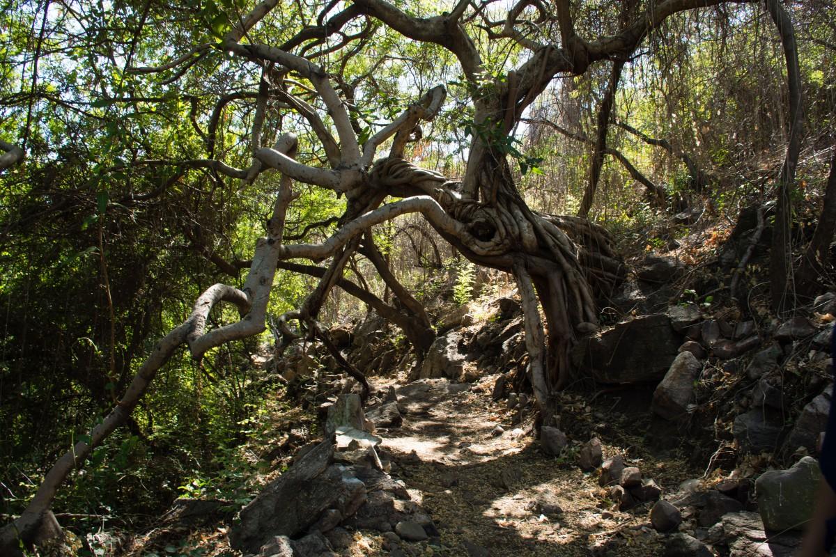 Hike 3