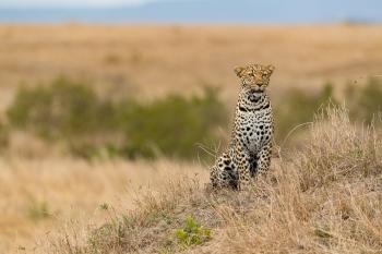 Wild Experiences in the Masai Mara - Part 2